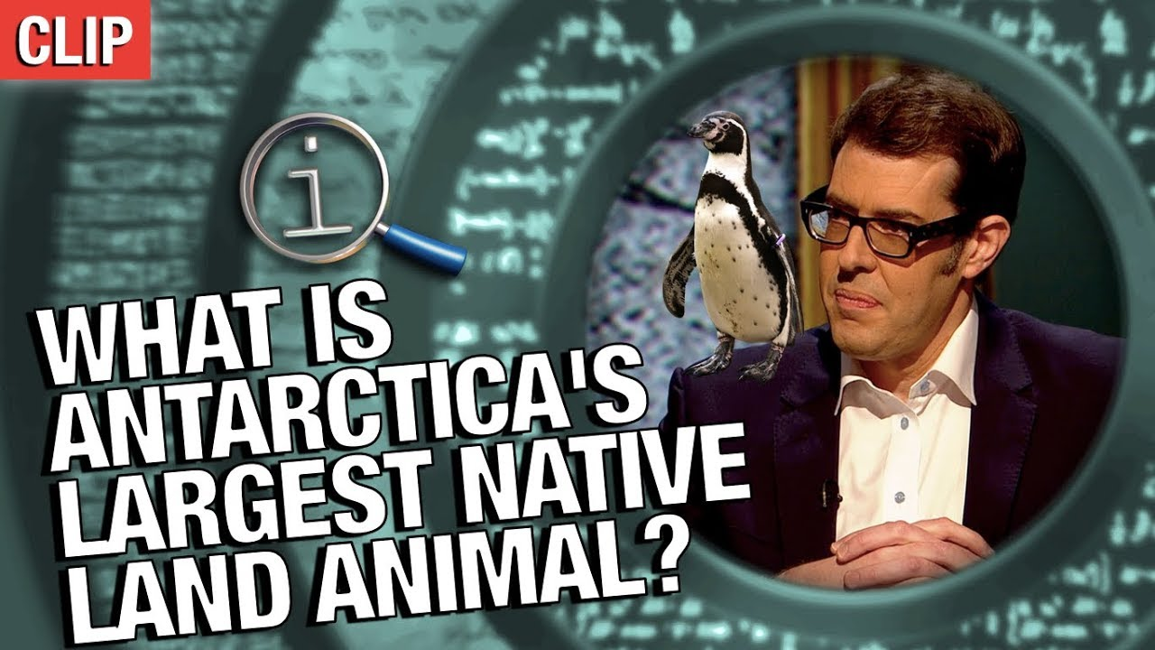 QI | What Is Antarctica's Largest Native Land Animal?