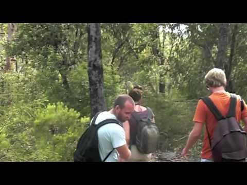 Royal National Park - Australia