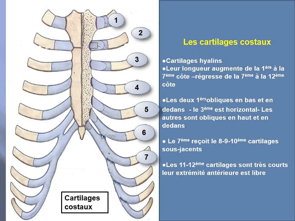 Ausgezeichnet Ms In Der Anatomie Bilder - Anatomie Von Menschlichen ...