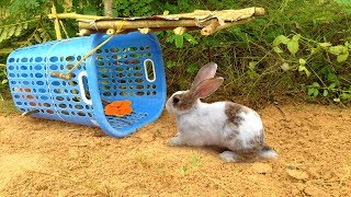 Amazing Quick Rabbit Trap Using Plastic Basket - How To Make Rabbit Trap With Basket Work 100%