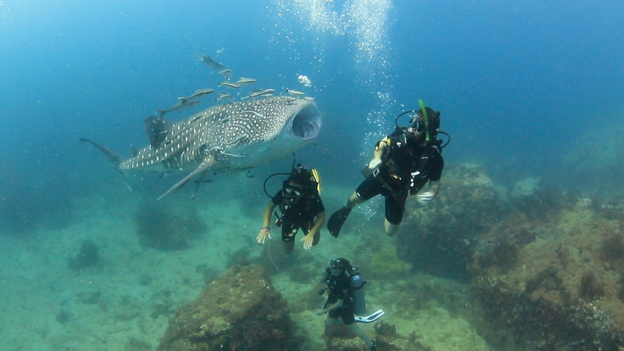 A really friendly baby whale shark youtube for Baby shark fish