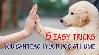 5 Easy Tricks You Can Teach Your Dog at Home