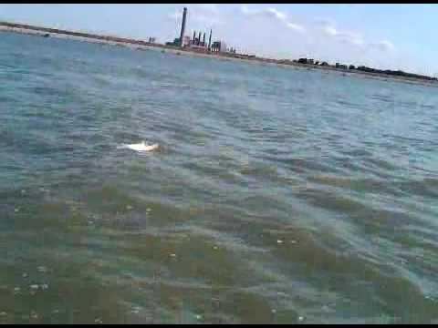 Pictures ohio sport fish consumption advisory ohio epa for Sandusky bay fishing