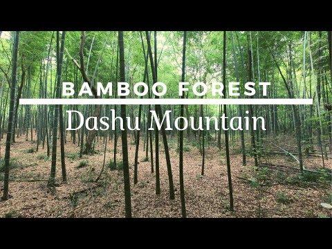bamboo-forest-at-dashu-mountain---hefei,-china-//-story-of-panda