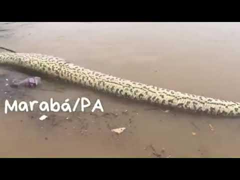 Sucuri em Marabá 2