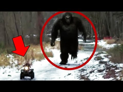 10 Mysterious Creatures In the Forest & Woods Caught On Camera Mp3
