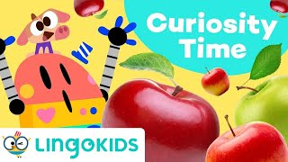 WHERE DO APPLES COME FROM? 🍏🍎  Educational Video for Kids | Lingokids
