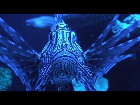 Mallorca - The Palma Aquarium