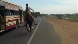 G.R JEYA KARTHI HORSE RIDING IN MADURAI