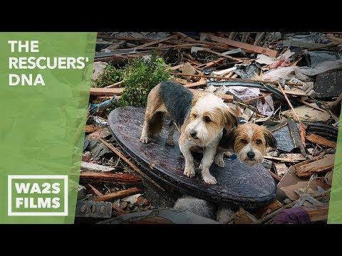 Boy & Dog Reunion After Oklahoma Tornado Rescue - Hope For Dogs | My DoDo