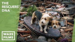 A Hope For Paws Boy & Dog Reunion After Oklahoma Tornado Rescue
