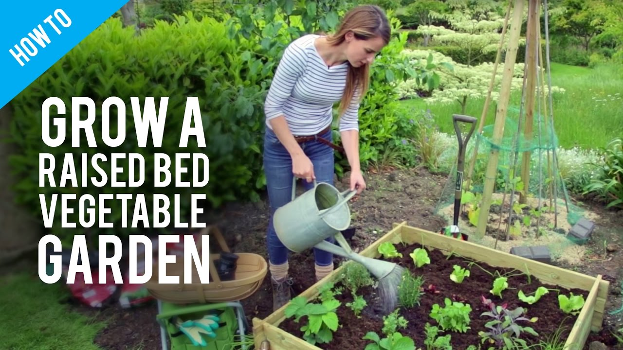 how to grow vegetables in raised bed gardens [ 1280 x 720 Pixel ]