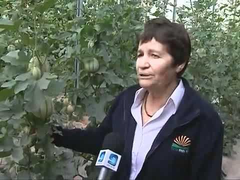 Инновационные израильские технологии. Овощеводство.