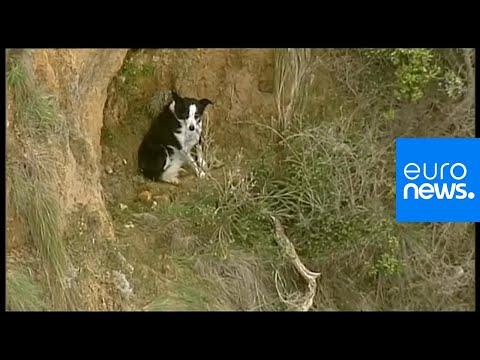 شاهد: عملية إنقاذ كلب علق على حافة منحدر في أستراليا  - نشر قبل 2 ساعة