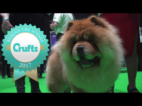 The most beautiful dogs of Day 2 | Crufts 2017!