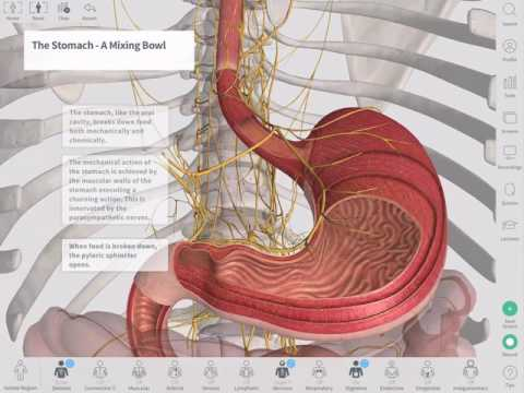 The GastroIntestinal Tract | Complete Anatomy