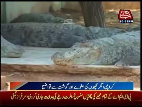 "Karachi: Traditional ""Sheedi Mela"" Kicks Off In Manghopir"