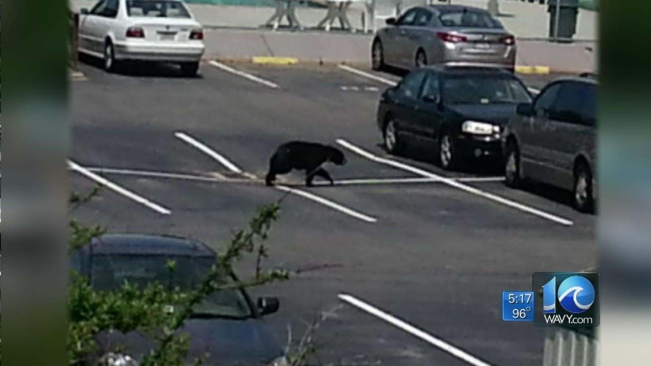 Anita Blanton reports on bear sightings - YouTube