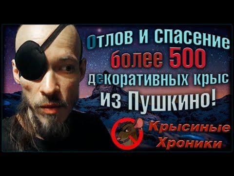 (О) Спасение более 500 декоративных крыс, из ужасной квартиры в Пушкино! (Fancy Rats)