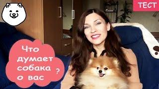Что думает о вас ваша собака?ТЕСТ