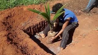 Método Plantio do Anjo | Sisteminha adaptado em São Vicente