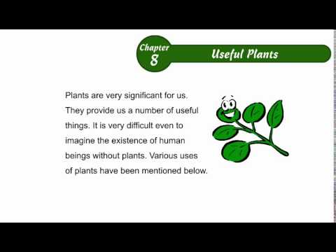 How Plants Are Useful To Us Environmental Studies Class 2 Chapter 08 Useful  Plantspart01 .