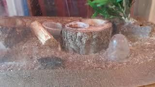 사슴벌레 키우기