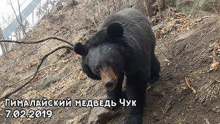 Гималайский медведь Чук 7.02.2019
