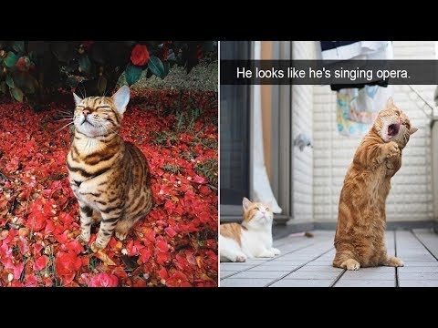 Hilarious Cat Snapchats That Will Leave You With The Biggest Smile (Part 2)