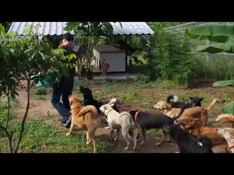 WVS Care for Dogs: New Hope Training Facility Feeding Time!