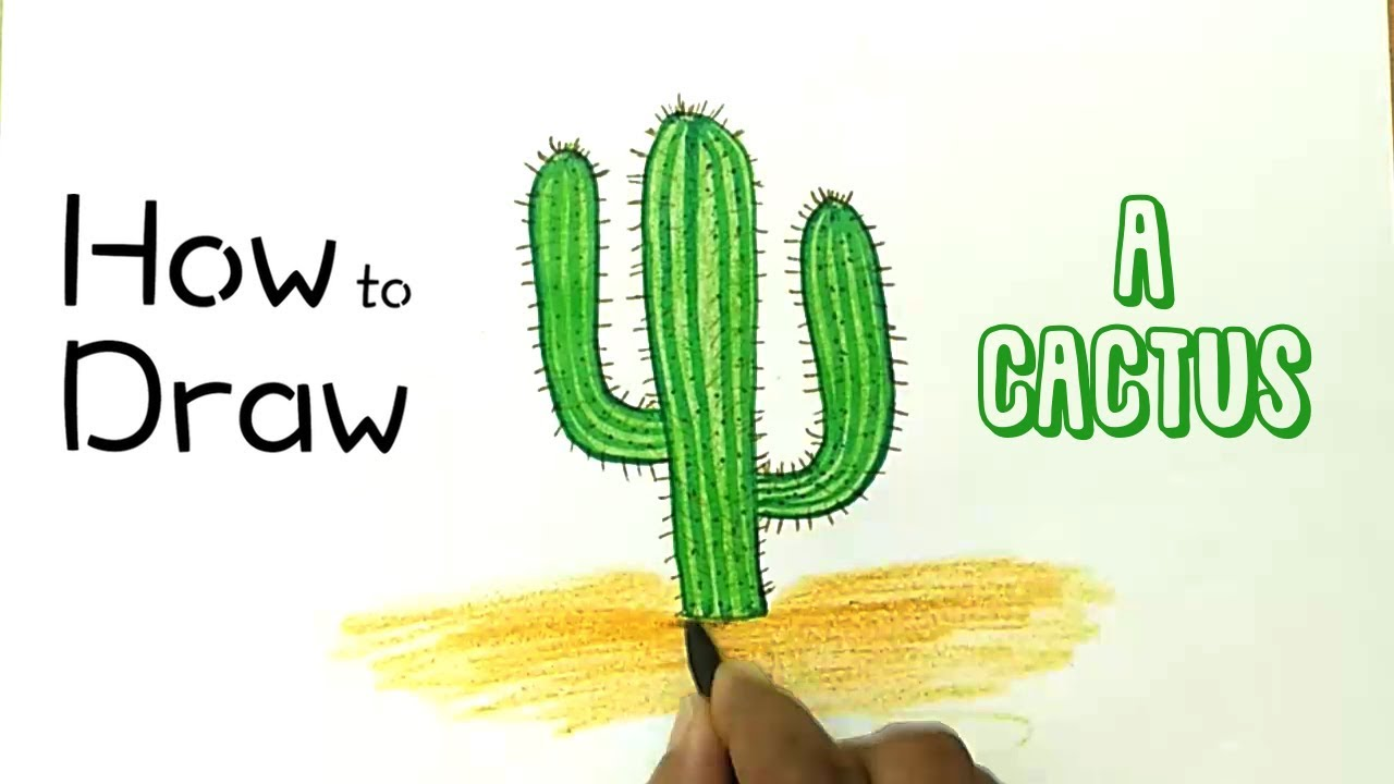 how to draw a cactus youtube. Black Bedroom Furniture Sets. Home Design Ideas