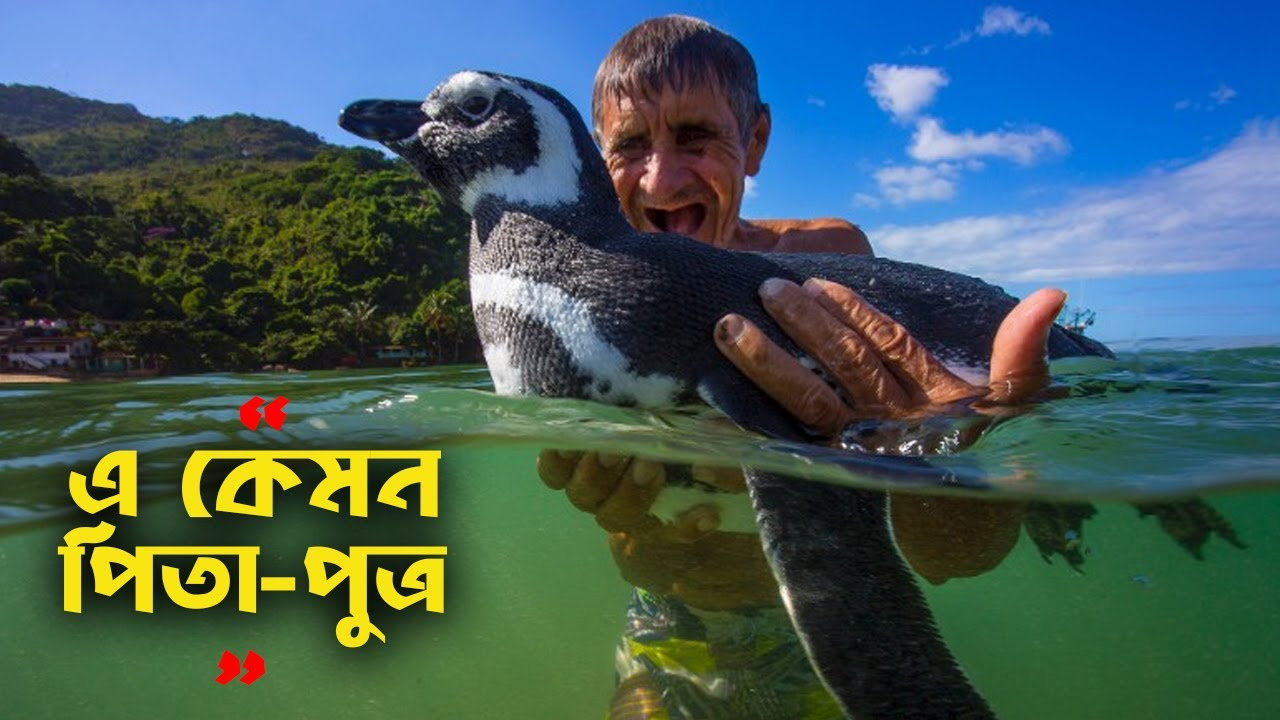 পূনর্মিলনের এ দৃশ্যে কাঁদতে বাধ্য হবেন আপনি Animal reunion with rescuer