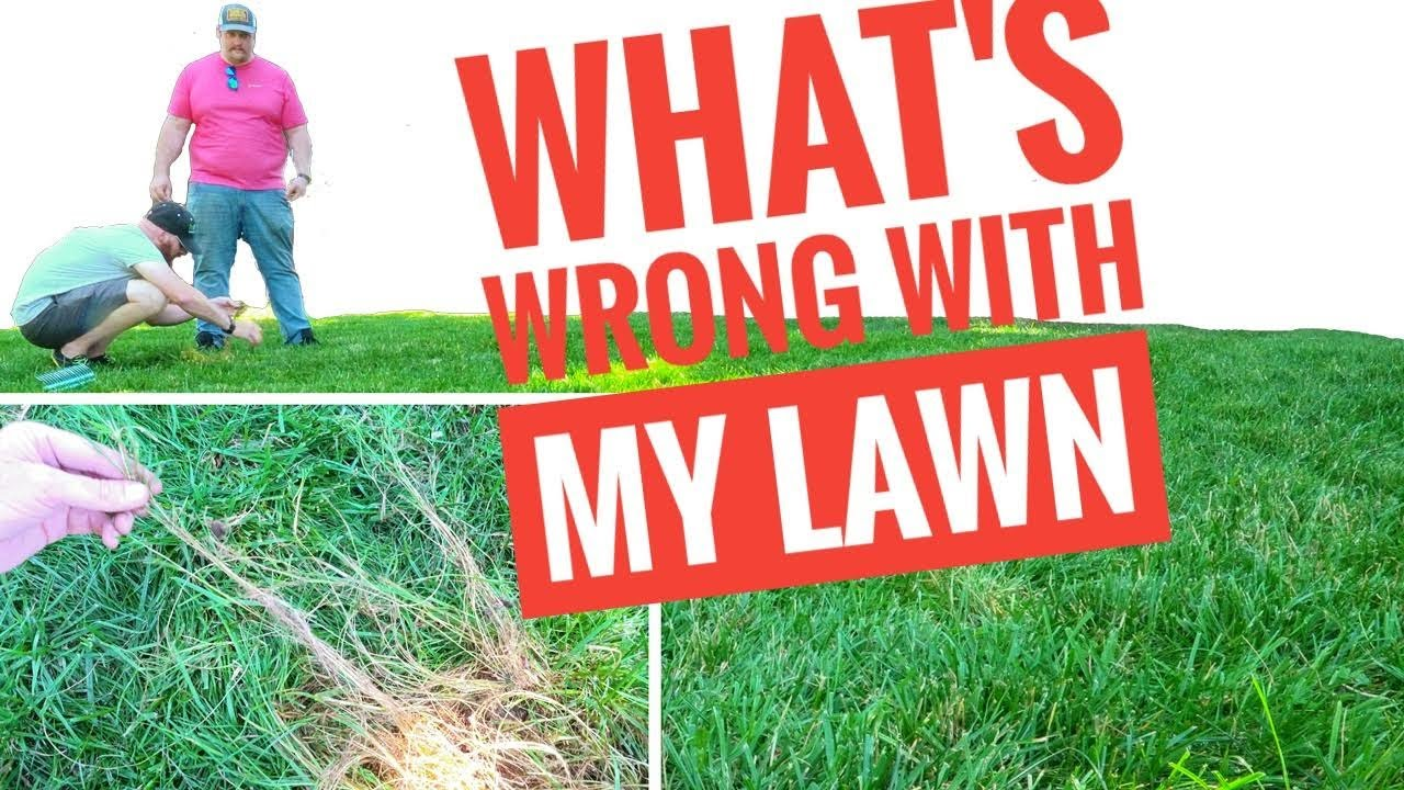 DIY How to Diagnose Your Own Lawn!  What's wrong with my lawn using Ginja's 5 Steps