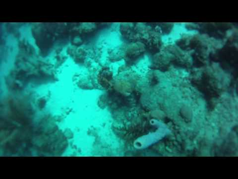 AOW Navigation Dive in Curacao