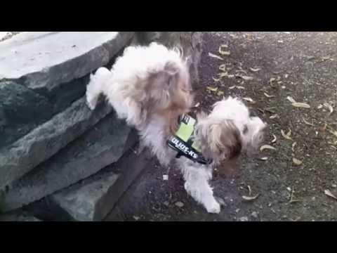 Hundetricks in Zeitlupe by Bonny Bolonka