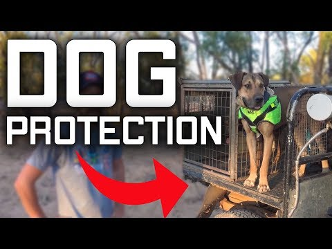 Hogs Dogs Quads- Dog Protection-  Channel Country Canvas- Hunting Pig Dog Australia