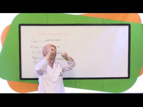 Görüntülü Akademi İlköğretim 3. Sınıf Fen Bilimleri  Soru Çözümleri