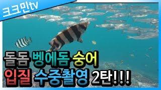 underwater bait fishing 2