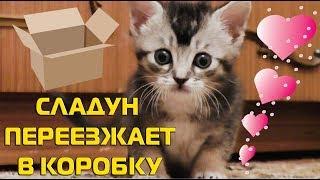 КОТЁНОК БЕЗ ЛАПКИ ПЕРЕЕЗЖАЕТ