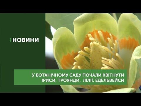 У ботанічному саду почали квітнути іриси, троянди, лілії, едельвейси