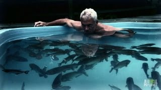 Man's Face Ripped Off, Eaten by Black Piranhas? | River Monsters