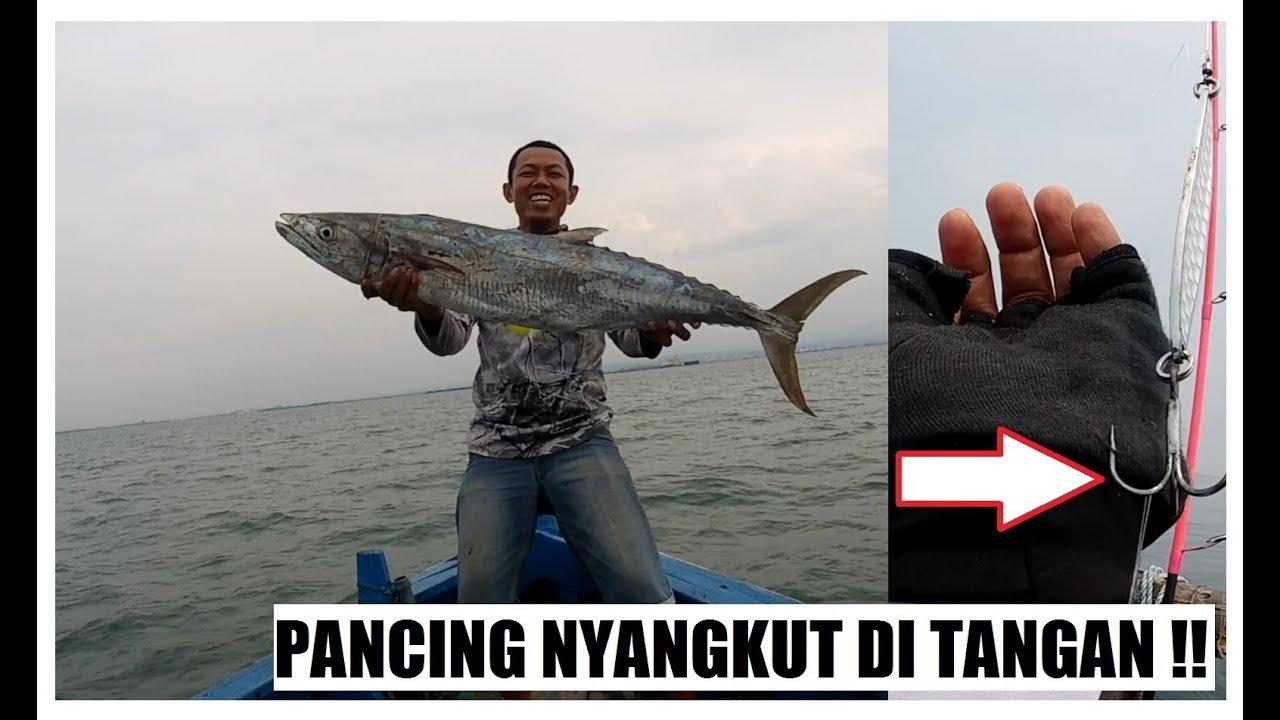 Download 50+ Gambar Ikan Tenggiri Besar Terbaru