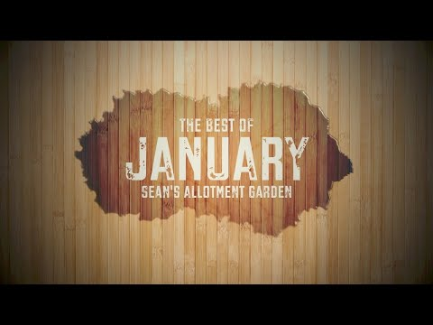 What to do in the kitchen garden (allotment) in January