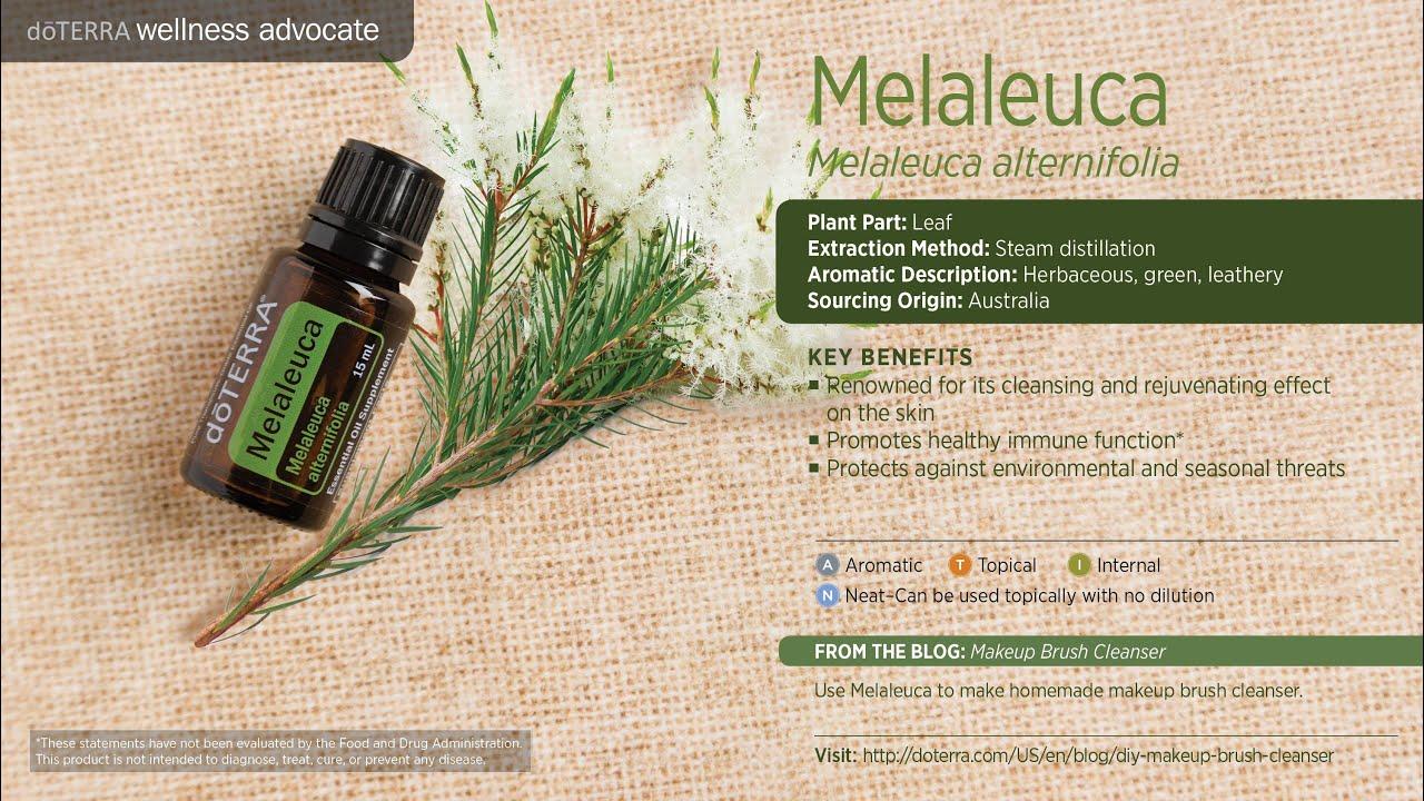 Aceite Esencial De Melaleuca Arbol De Te Doterra Pasion Pe
