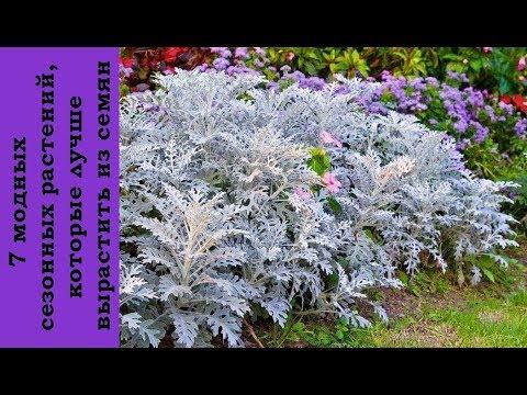❀ 7 модных сезонных растений, которые лучше вырастить из семян
