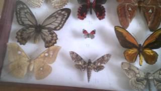 """Энтомологическая выставка """"Планета насекомых"""". Коллекционер Андреев С. А."""