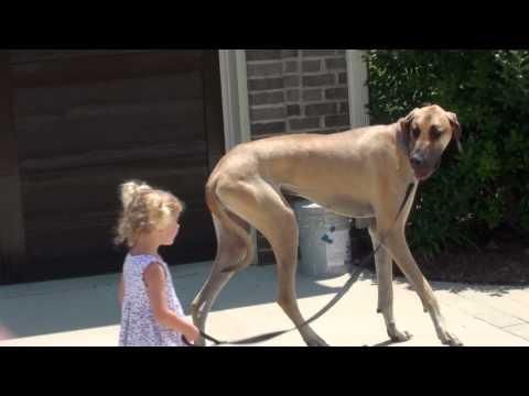 Sadie walks Chief