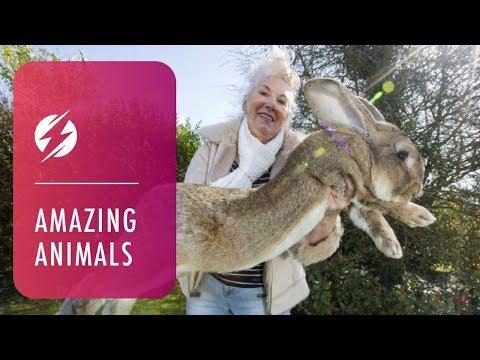 Meet Giant 4ft Rabbit Darius