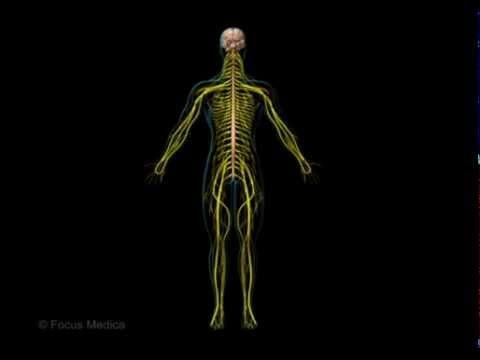 Unser Körper in 3D - Sinne und Nerven - YouTube