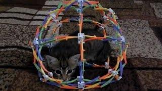 Милые котята | Котенку 2 месяца | Котенок играет